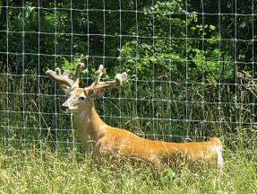 Deer & Game 3