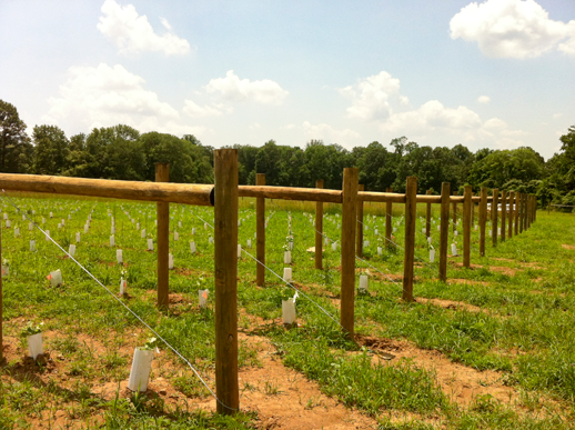 Lb Fencing Vineyard Orchard And Hops Trellises