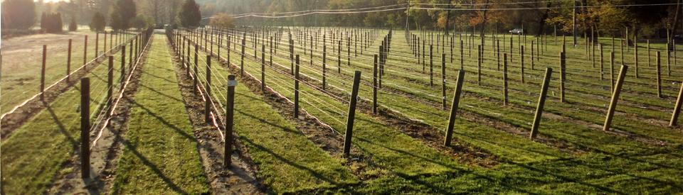 Lb Fencing Vineyard Orchard And Hops Trellises